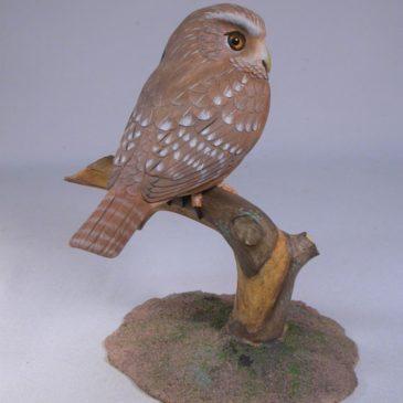5-7/8″ Ferruginous Pygmy Owl