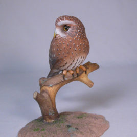 5-7/8″ Northern Pygmy Owl