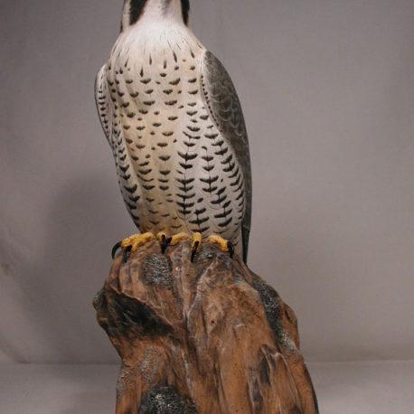 15″ Peregrine Falcon