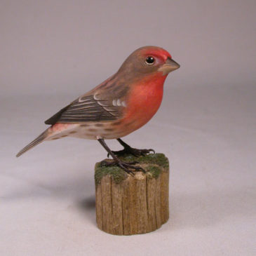 House Finch #1