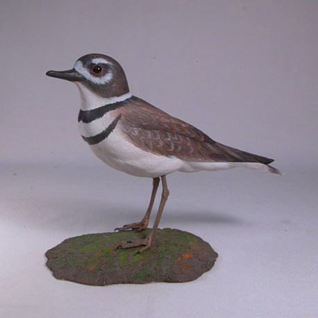 9 1/4″ Killdeer