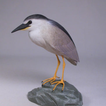 5-5/8″ Night Heron #1