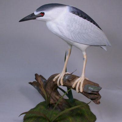 heron-pelican-bittern