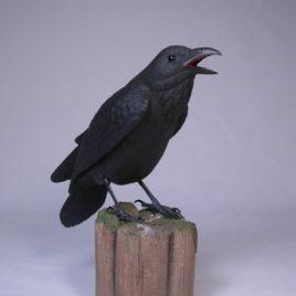 9-1/4″ Common Raven