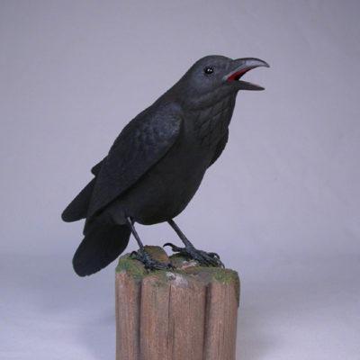 crow-raven-roadrunner
