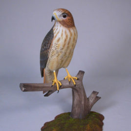 10″ Red-tailed Hawk