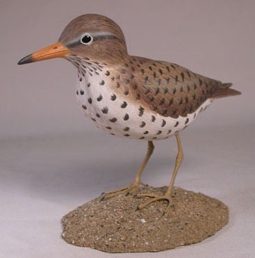 spotted-sandpiper3