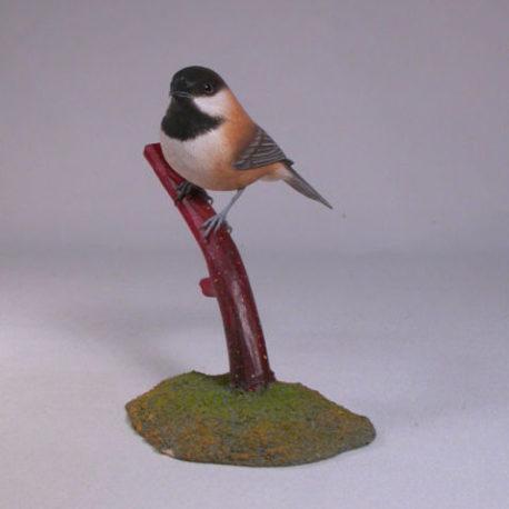 Chestnut-backed-Chickadee2