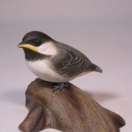 Baby Black-capped Chickadee #2
