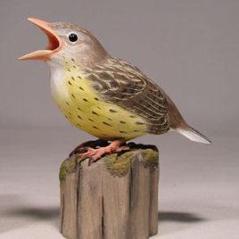 Baby Meadowlark