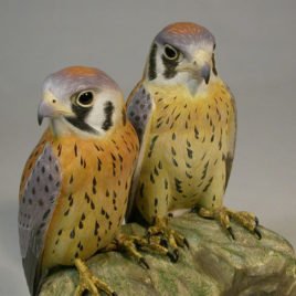 Pair of Baby Kestrels