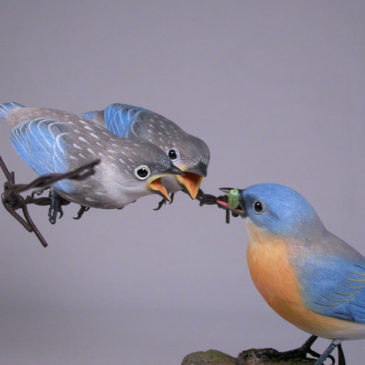 Eastern Bluebird (Female) with 2 Babies