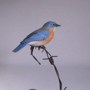 Eastern Bluebird on wire#2 (Female)