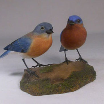 Pair of Eastern Bluebird male and female