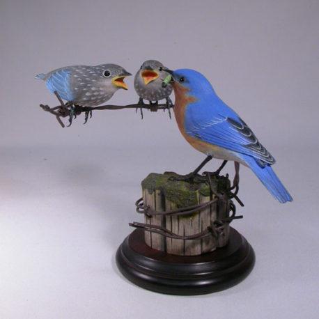 bluebirdand2babies1