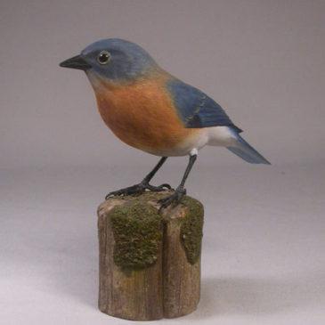 Eastern Bluebird (Female) #1