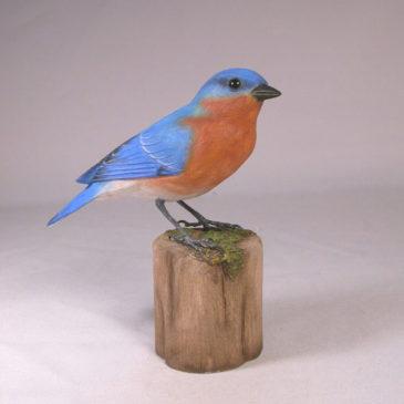 Eastern Bluebird (Male) #1