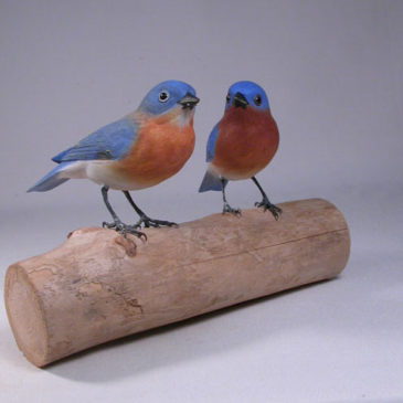 Pair of Eastern Bluebird male and female #2