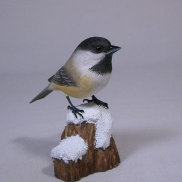 Black-capped Chickadee on Snow #3