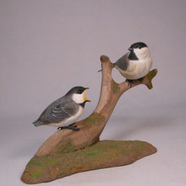 Black-capped Chickadee and a Baby #2