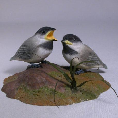chickadee-pair1-1