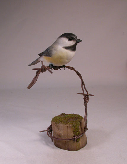 Black-capped Chickadee on barbed wire
