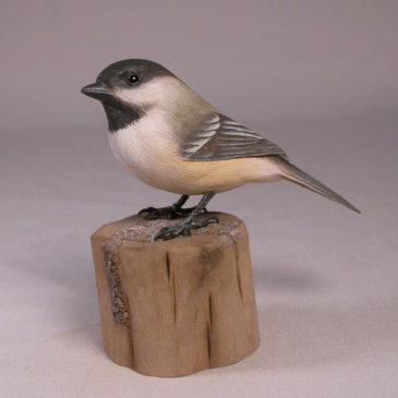 Black capped Chickadee#1