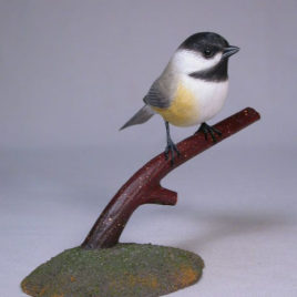 Black-capped Chickadee#2