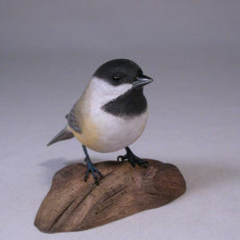 Black-capped Chickadee#4