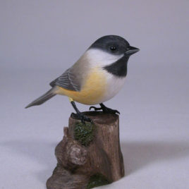 Black-capped Chickadee#6