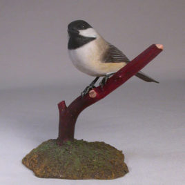 Black-capped Chickadee#7