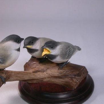 Black-capped Chickadee Family
