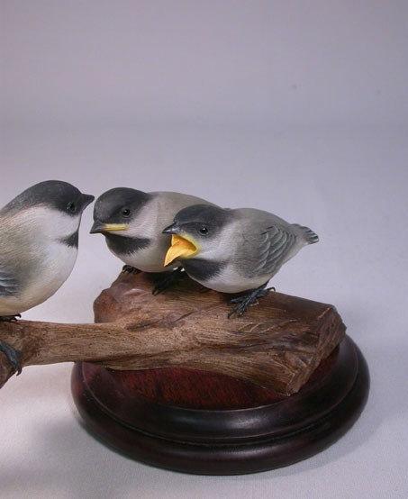 Chickadee Family