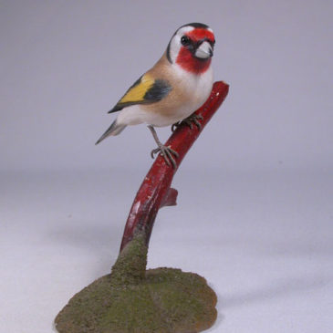 European Goldfinch #3