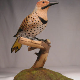 10-3/4″ Life Size Northern Flicker