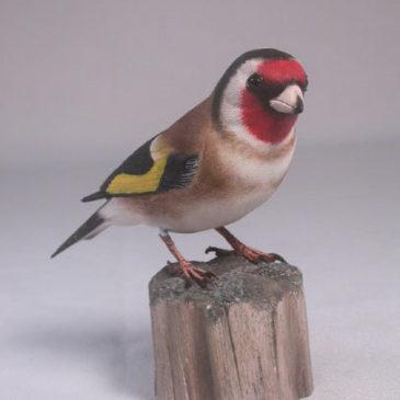 European Goldfinch #1