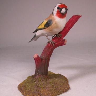 European Goldfinch #2