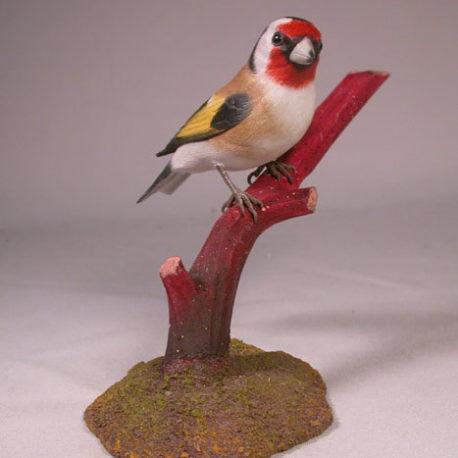 goldfinch-european2-1