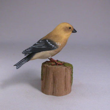 American Goldfinch #1 (Female)