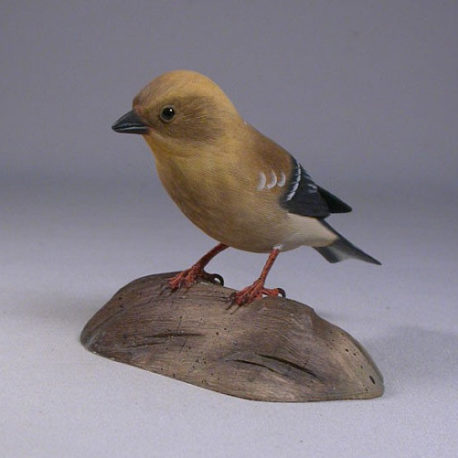 goldfinch-female2-1