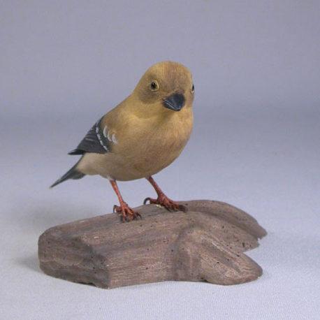goldfinch-female3-1