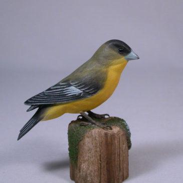 Lesser Goldfinch #1