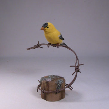 American Goldfinch on barbed wire