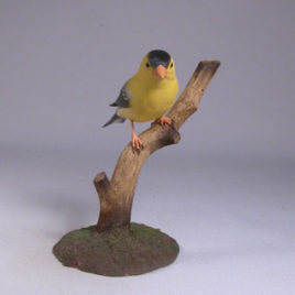 American Goldfinch #2(Male)