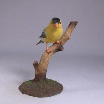 American Goldfinch #2(Male)