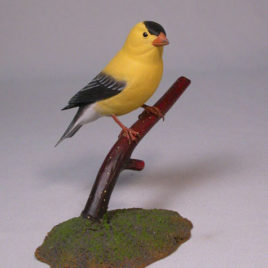 American Goldfinch #4