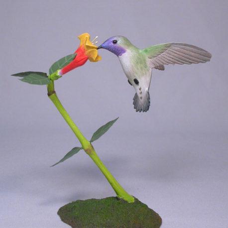 Open-Winged Costa's Hummingbird