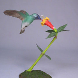 Open Winged White-eared Hummingbird #1
