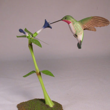 Open-Winged Broad-tailed Hummingbird #1
