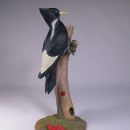 8″ Ivory-billed Woodpecker (Female)